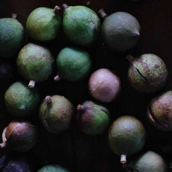 Macadamia Shampoo y Acondicionador