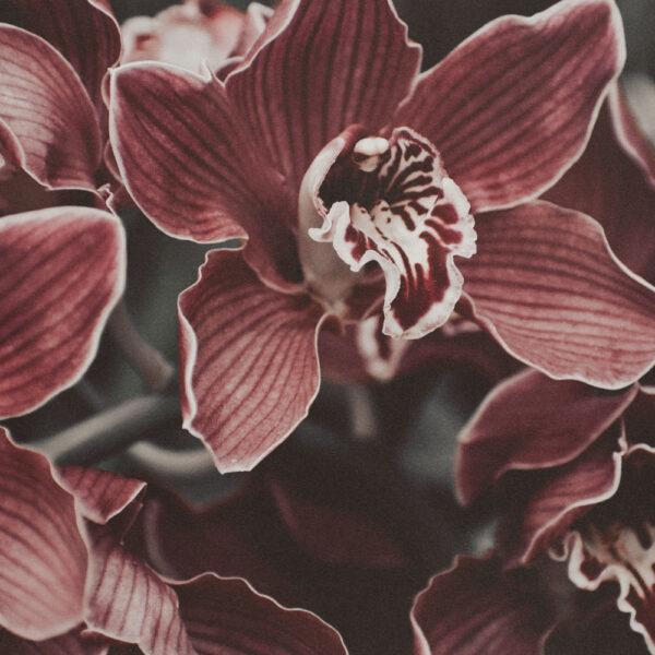 Orquídea Pro-Color.